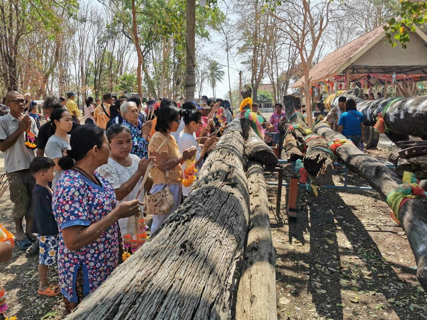 People come to pray for Takian tree