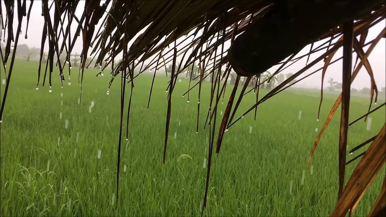 หยดน้ำฝน